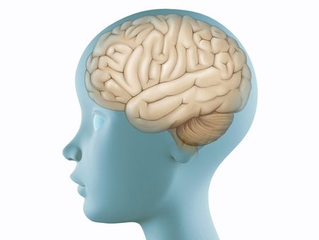 Brain illustration on profile head transparent