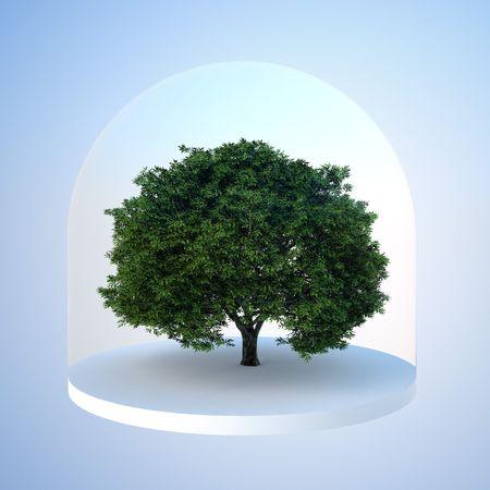 Baum unter konzeptionellen Glasglocke-Naturschutzgebiet