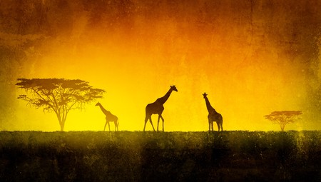 African landscape flora and fauna in sunset time Stock Photo - 7225846