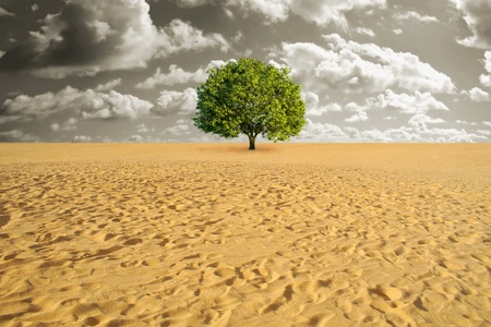 survive: A green tree alone in sand desert