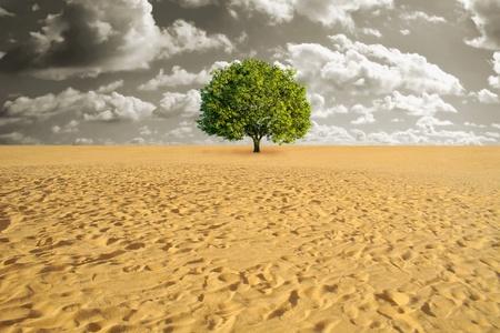 Een groene boom alleen in zand woestijn Stockfoto