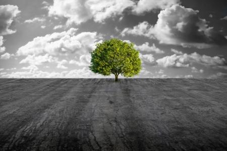 A green tree alone in concrete plain