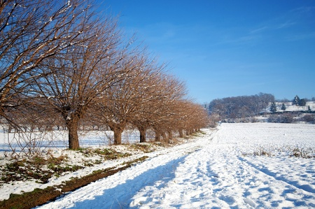 winterly: Country side in winter time with a little snow
