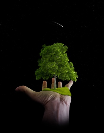 Tree and meadow in palm of hand  photo