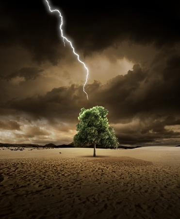 Lighting is about to hit a treein the desert photo