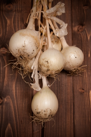 clearly: Fresh picked onion on clearly wood table Stock Photo