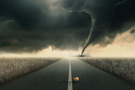 The yellow rose on road awaiting the twister