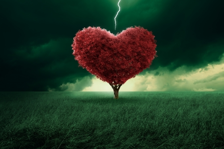 first love: Tree in the shape of heart hit from a lightning