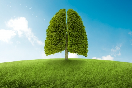 o2: Tree with form of lungs, oxygen for the earth Stock Photo