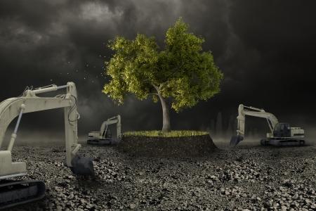 The last tree survive to wild urbanization