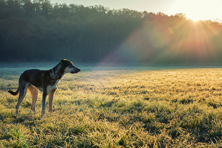 My dog in a frozen morning looking in the field