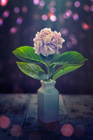 hydrangea flower on wood ace table background