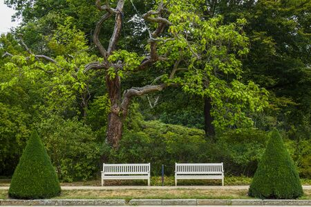 harmonious ensemble of trees, shrubs, a meadow and white park benches in a public garden