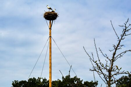 two storks in the stork's nest from a cartwheel on a sunny day in Moritzburg Saxony Banco de Imagens