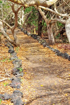 A path through the trees on the island of Isabela, Galapagos, Ecuador