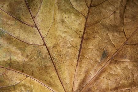 Close up of a autumn leaf