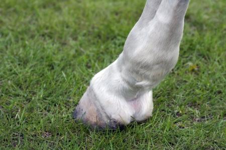 말의 발굽