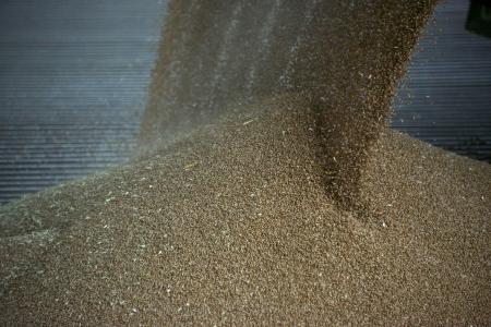 d�livrance: Grain d�livrance d'un moulin