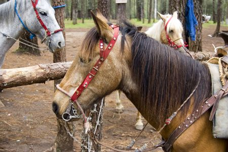Paarden in Rancho Nuevo park in Chiapas, Mexico