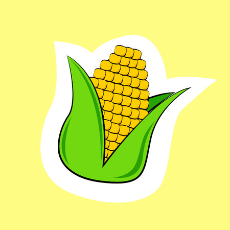 ear of corn isolated on yellow background