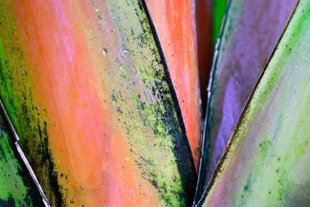 Detail of colorful leaves coming out of a banana tree trunk Stock Photo