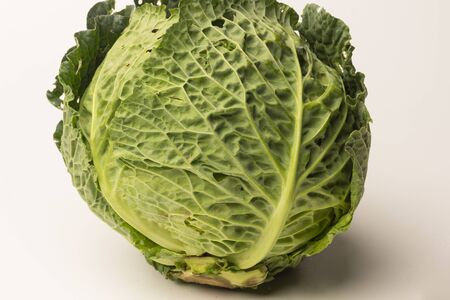 Green cabbage, raw and rich in vitamins, freshly picked from the garden and organically grown. Cabbage can be eaten in different ways.