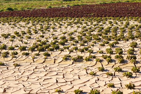 Lack of water, sun and little rain, land broken by little irrigation and very hot. Quartered earth. Little vegetation, arid and poorly cultivated area