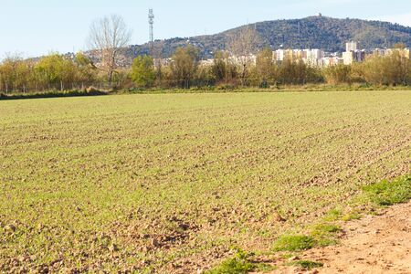 Fields worked in the agricultural park of Baix Llobregat and freshly sown for the summer harvest. Field that begins to germinate plants