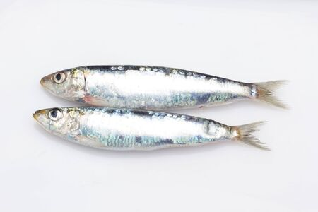 Sardine is a fish that is easily found in fishmongers, it is usually fished in the Mediterranean Sea and is common in the Mediterranean diet, healthy and full of Omega Фото со стока