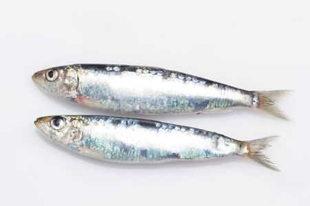 Sardine is a fish that is easily found in fishmongers, it is usually fished in the Mediterranean Sea and is common in the Mediterranean diet, healthy and full of Omega Stockfoto