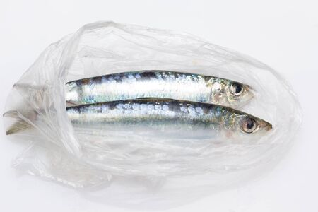 Sardine is a fish that is easily found in fishmongers, it is usually fished in the Mediterranean Sea and is common in the Mediterranean diet, healthy and full of Omega
