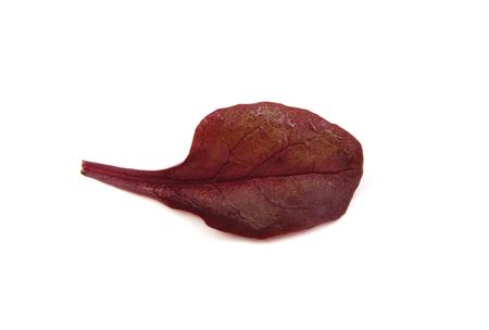 Purple lettuce leaf on a white background photo