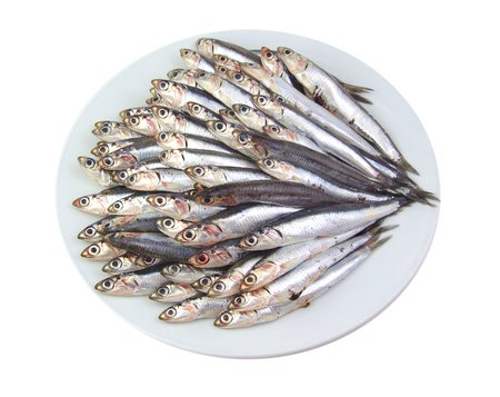 engraulis encrasicolus: Mediterranean anchovies in a white dish isolated on white background
