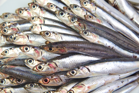 pond smelt: Close up of fresh raw mediterrean anchovies