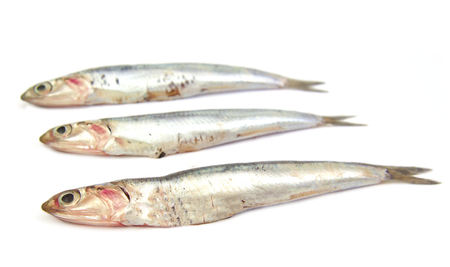 fish vendor: Three anchovies with a slighlty blurred background