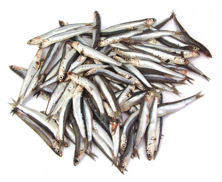 fish vendor: Bunch of anchovies on a white background