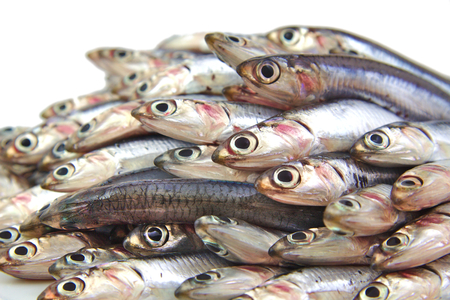 fish vendor: Bunch of fresh mediterranean anchovies on white background