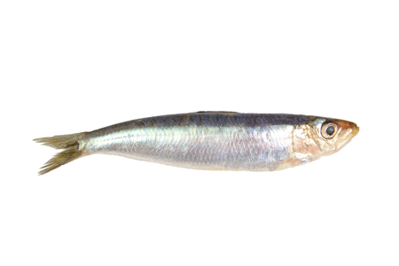 Fresh raw sardine isolated on white background Foto de archivo