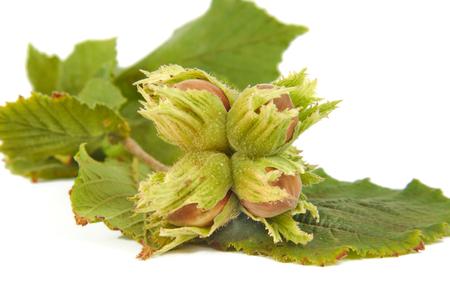 흰색 배경에 고립 된 잎 Hazelnuts