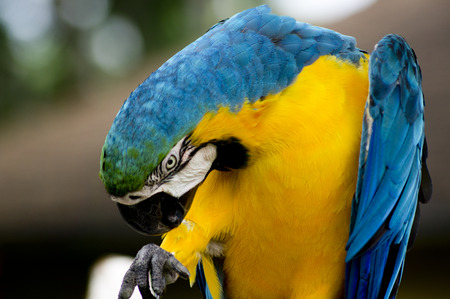 macaw: exotic Macaw Stock Photo