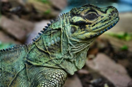 coldblooded: Lizard