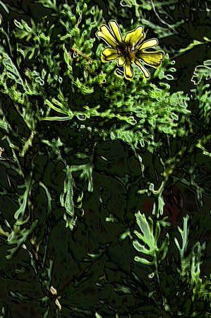 botanic: Botanic wallpaper