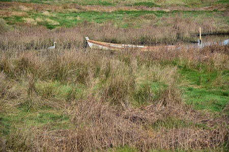 Small boat and a white heron in a marsh photo