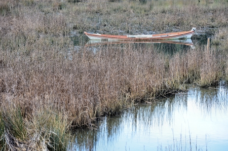 Semi-sunken boat in the middle of a swamp photo