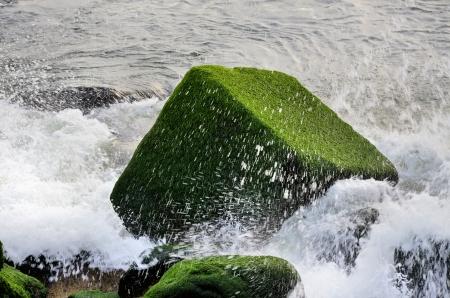 algas verdes: Stone cubo cubierto de algas verdes Foto de archivo