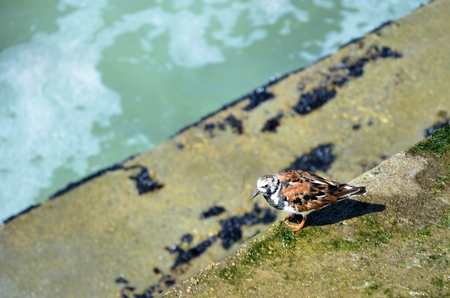breakwater: European sea turtledove rest on the breakwater