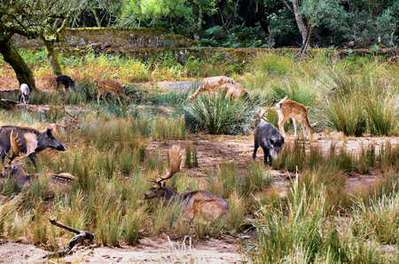 Deer and wild boar in the forest hiding in the undergrowth photo