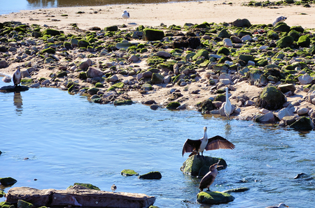 egrets: Cormorants, egrets and gulls on the shore of the river Stock Photo