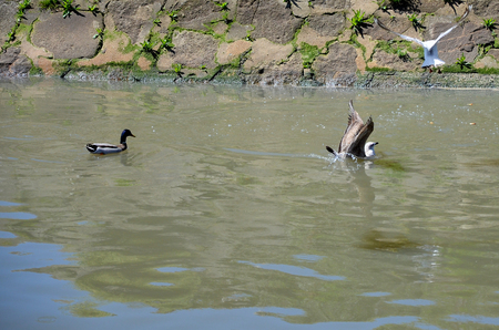 douro: Wild birds flying and swimming near the banks of the Douro river Stock Photo