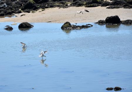 douro: Seagulls on the Douro river